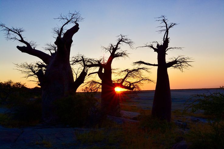 Visited Kubu Island during our journey through Botswana whilst travelling the world. Absolutely one of the places to see before you die in Africa.