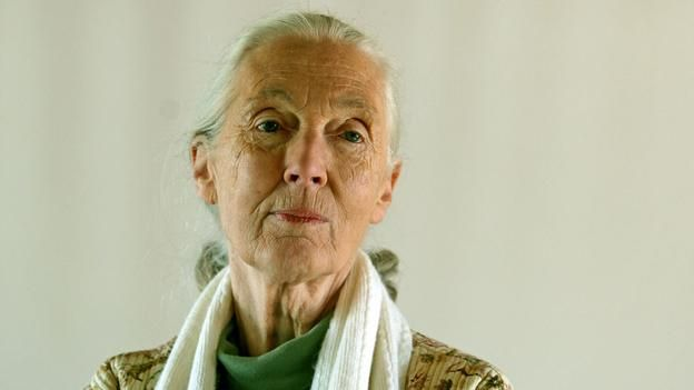 Primatologist Jane Goodall transformed our understanding of chimpanzees