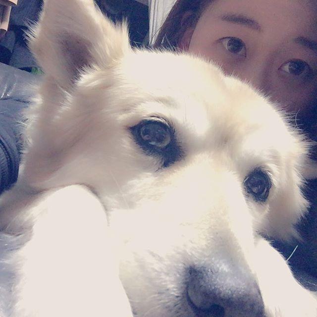 昨日1月27日はゆんが亡くなって1年。 1年って早いな〜 初めての飼い犬。捨てられてた所をおかんに内緒でお父さんと拾ってくるってゆう笑 たくさん思い出ある(*´ー`*) 天国でも元気でいてください。 幸あれ。 #ゆん#愛犬#雑種#一回忌#姉妹#mysister#会いたい#犬