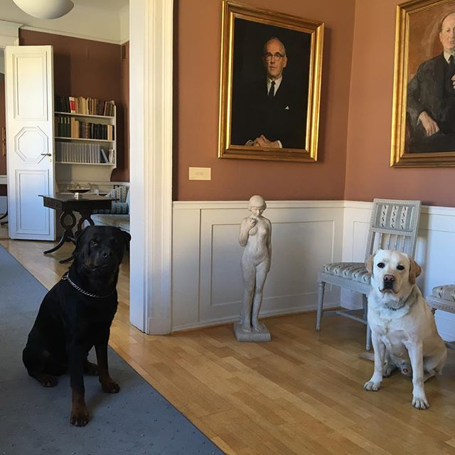 In Stora Enso's office in Falun, Sweden, office dogs are allowed and appreciated colleagues (by most people). Here is Kasper and Snow on guard outside one of the offices.