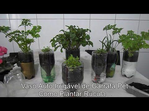 Vaso Auto Irrigável de Garrafa Pet, Como Plantar Rúcula
