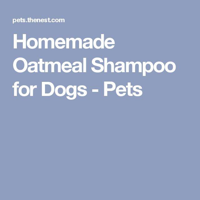 Homemade Oatmeal Shampoo for Dogs - Pets