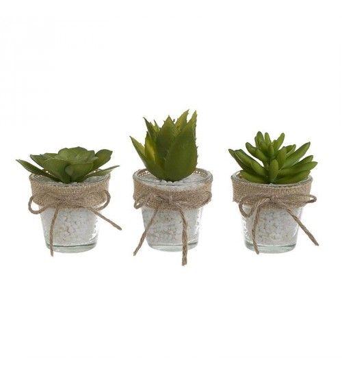 S_6 PLANT IN GLASS POT IN 3 DESIGNS H8-13  CM