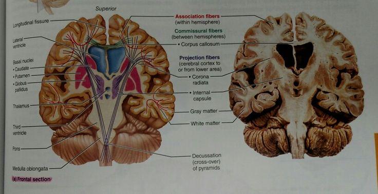 Psychology - Wikipedia