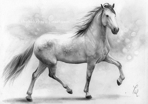 Horse IV. PRINT from an original graphite pencil drawing on paper by Drawing Illustration