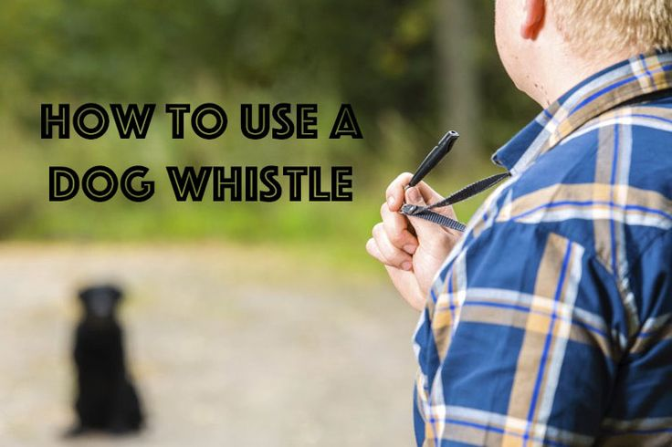 Dog whistles let you communicate with your dog over long distances! #dogtips