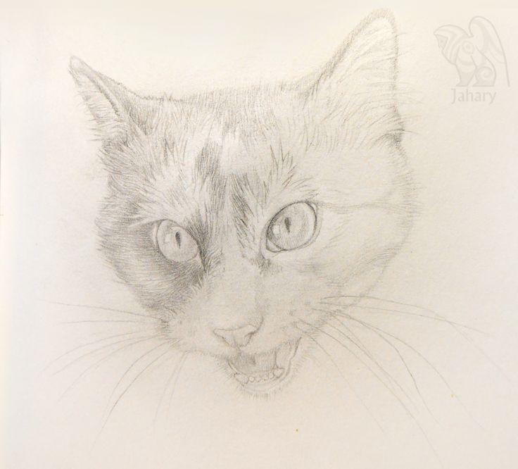 #skecth #skecthbook #art #pencil #animal #portrait #Jahary #cat #cute #скетч #скетчбук #арт #карандаш #животное #портрет #кошка