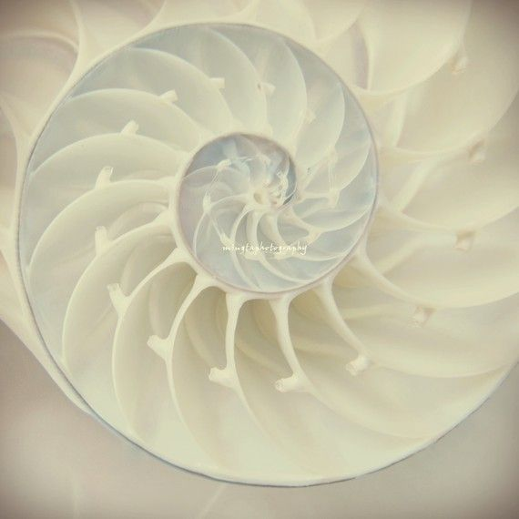 Perhaps the Veiled Queen's chamber looks like a nautilus shell.
