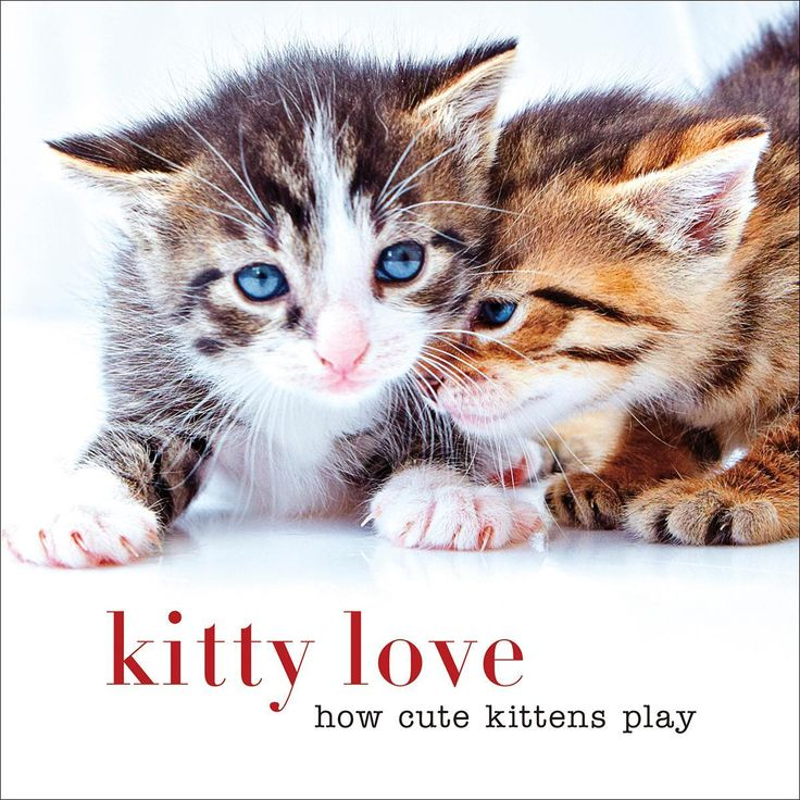 Sterling Publishing-Kitty Love How Cute Kittens Play. It is love at first sight! Celebrate the cuteness of affectionate kittens as they cuddle, snuggle and play.