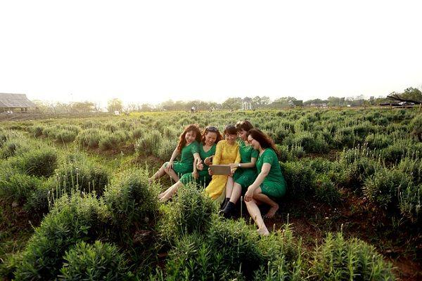 Vườn hoa oải hương rộng hơn 1.500 m2 tại Hà Nội - Địa Điểm Du Lịch   Phượt   Khách Sạn Giá Rẻ   Món Ngon 3 Miền   Nơi Tôi Sẽ Đến