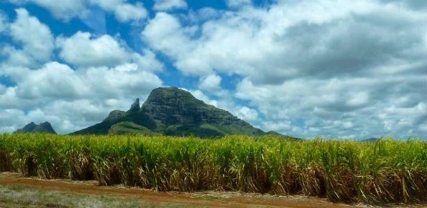 La récolte de la canne à sucre