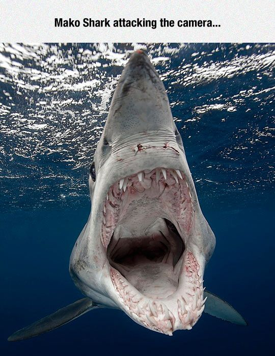 The Ocean Is A Terrifying Place