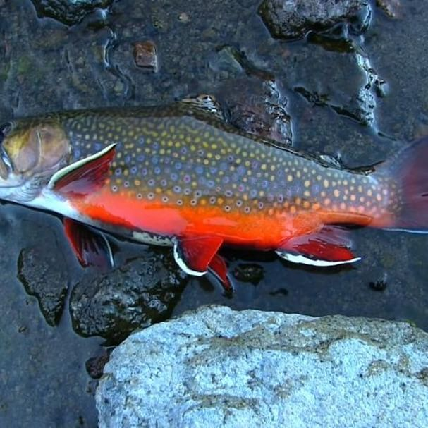 226 best atv camping images on pinterest emergency for Best trout fishing near me