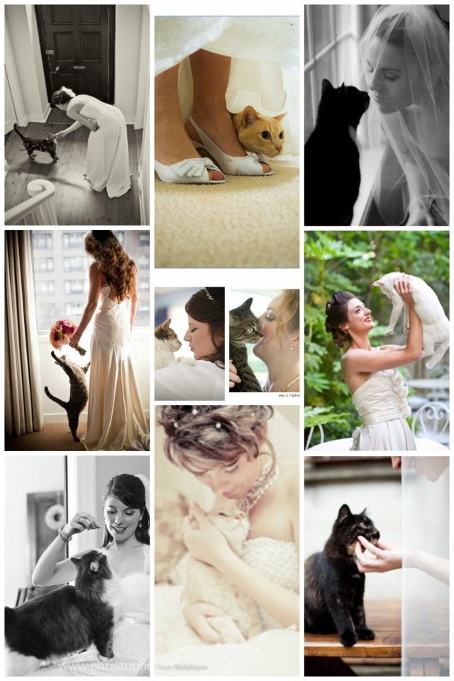 Kitty would be like the second One hiding under the skirts and Mitty would be like the one after the flowers  Wedding Moments with Cats