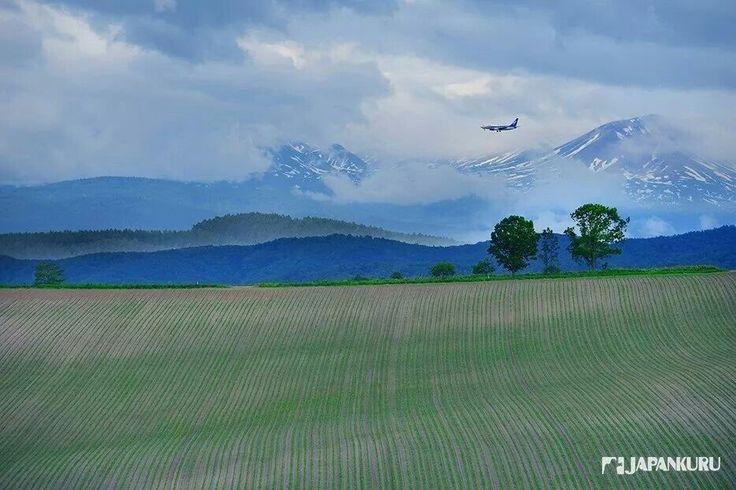 Wanna be Free~  #biei #hokkaido #japan #japankuru #cooljapan #rentalcar #nature