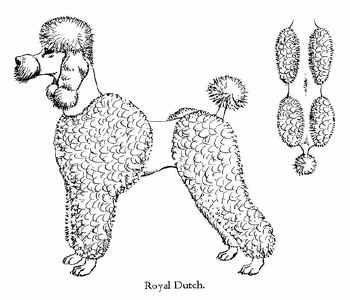 """""""Royal Dutch"""" Poodle Cut.  #poodleclip #poodlecut @Huxtable Poodle Samoht"""
