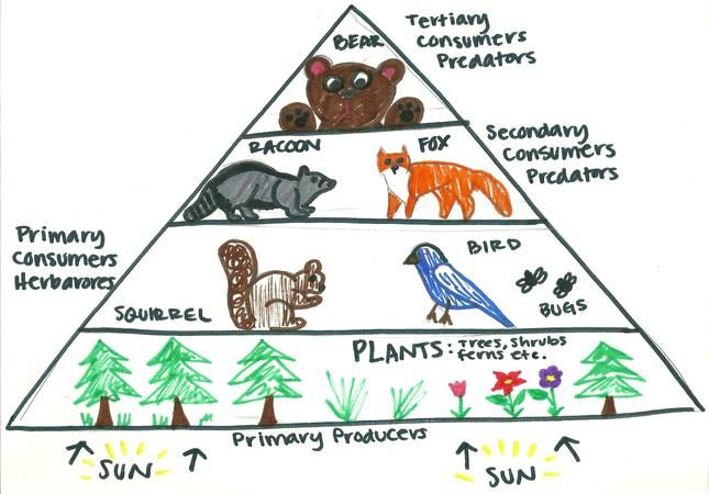 Pin By Carino Of The Fifth Sun On Classroom Savvy Science Science
