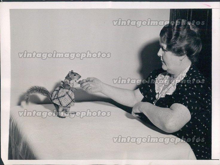 1944 Squirrel Dressed Clothes Animal Mark Bullis Washington Press Photo
