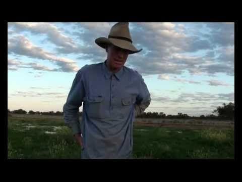 Feral Pigs in Australia - impact on farming, Part 3.