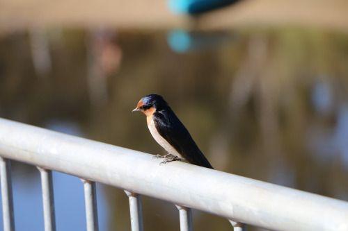Bird on the railing |