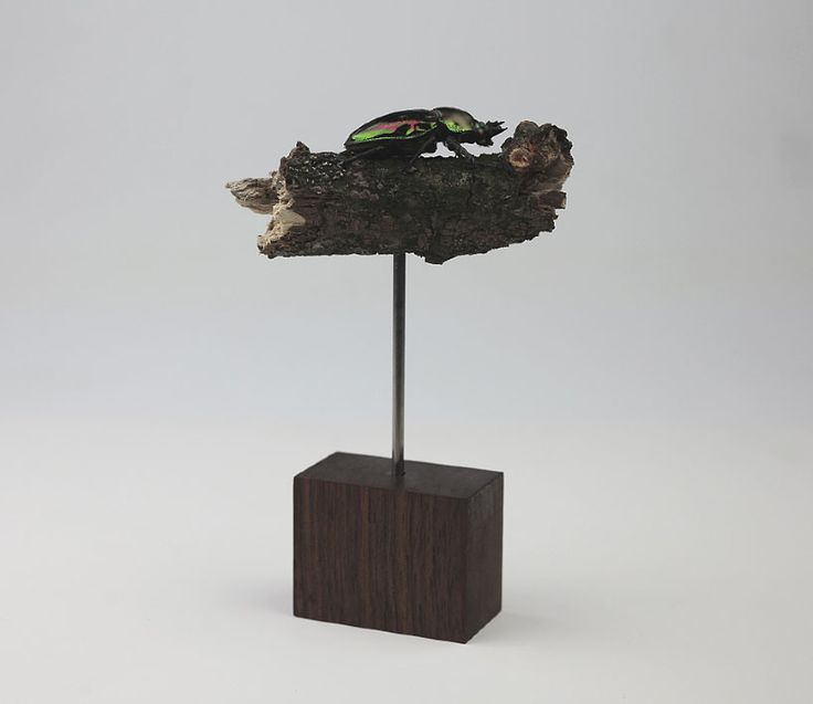 chinese artist kebel li exposes the magnificence of earth's insect species in his sculptural work of beetles on a branch.