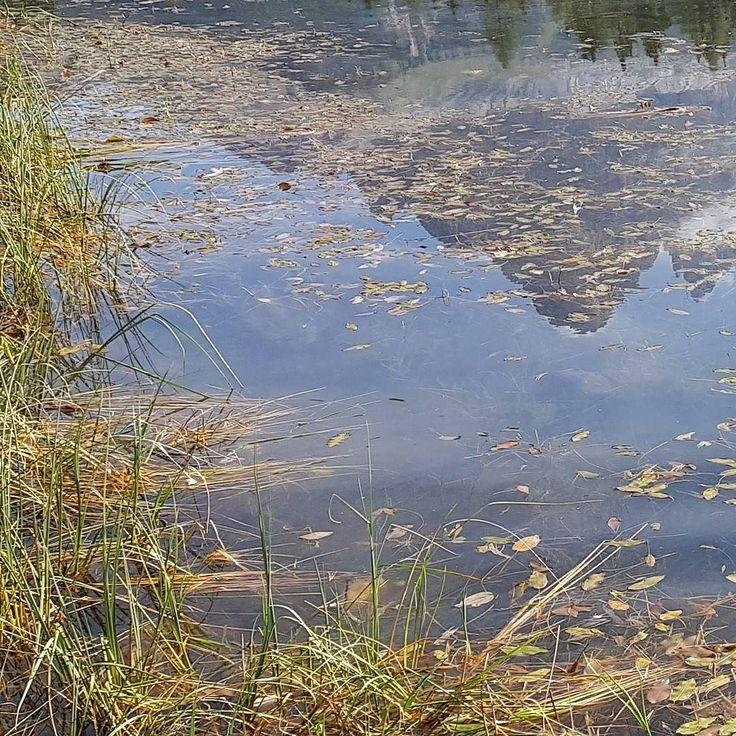 #lake #laghetto #anatre #ducks #mountain #mirror