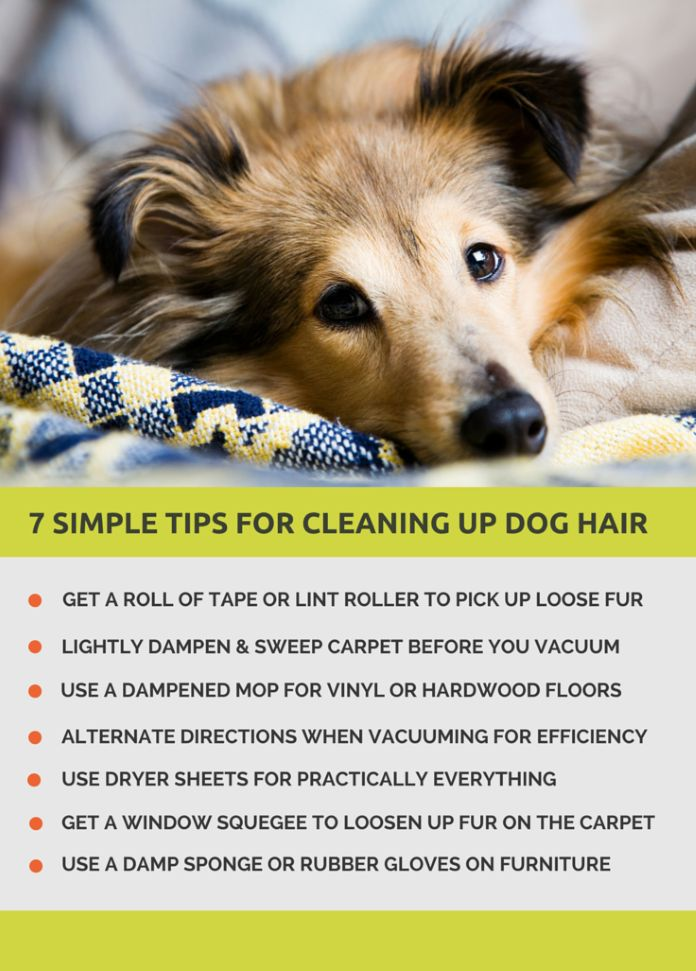 7 Simple Tips for Cleaning up Dog Hair – Puppy Leaks