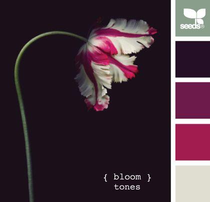 { bloom tones }