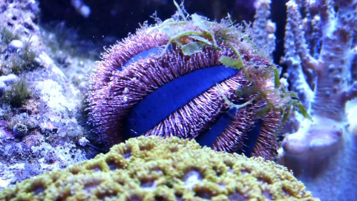 Мой риф часть 5