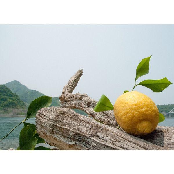 奇跡の無人島檸檬「天照-アマテラス-」とは?柑橘の栽培のためだけに代々受け継がれた無人島で、一切の農薬を使わずに丹精込めて作られたレモン。完全無農薬だからこそ皮まで美味しく食べられる純国産天然レモン。このレモンはまさに自然との対話から生まれた、奇跡の果実。さらにその中から、100年以上の歴史ある生産者によってこだわりの選別を行います。生命の楽園、この無人島の中でも、ひときわ太陽の光を受けた場所のみ実ると言われる、力強く美しく、まるでそのものが天を照らす太陽のような力漲るレモンのみが「奇跡の無人島檸檬 天照-アマテラス-」として選び出されるのです。
