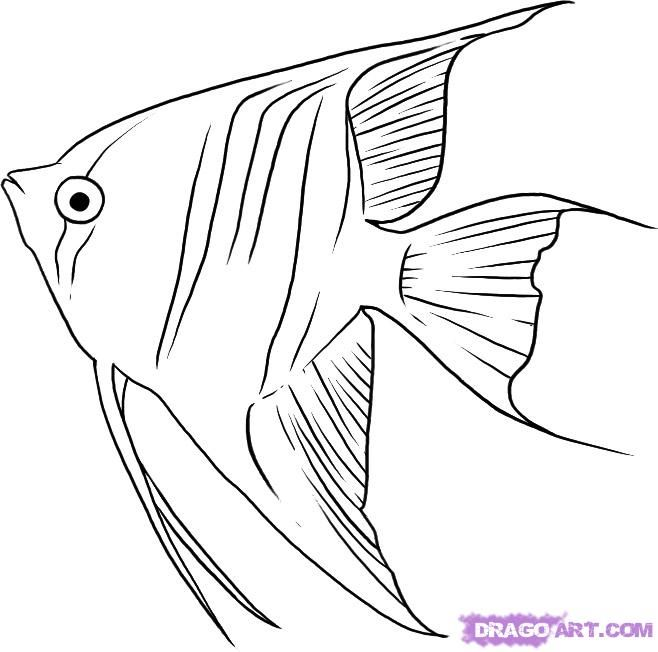 Fish Drawings Art Drawing Things Angelfish Flowers
