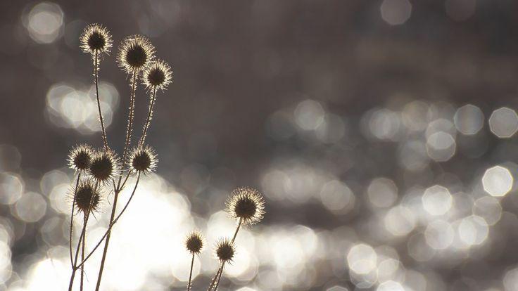 Glittering (Explore 2014-03-12) Photo - Visual Hunt