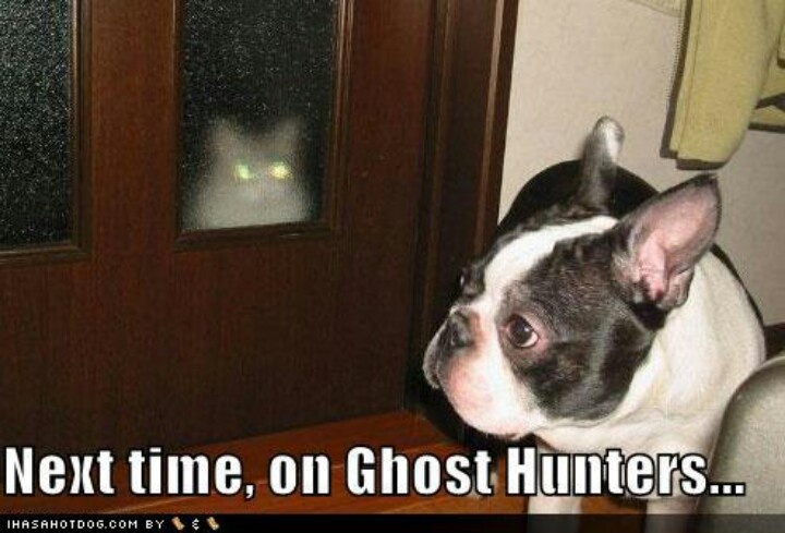 Image result for site:pinterest.com dog seeing ghost