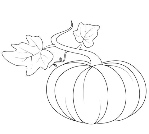 Pumpkin With Leaves Coloring Page From Pumpkins Category Select 26719 Printable Crafts Of Cartoons