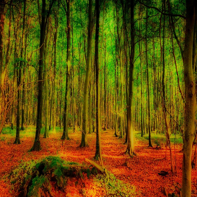 Orton In The Woods by jakeof, via Flickr