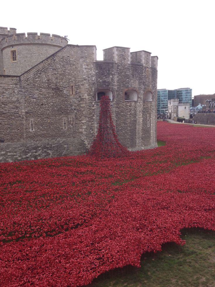 #TowerPoppies #FirstWorldWar #Remembrance #TowerOfLondon
