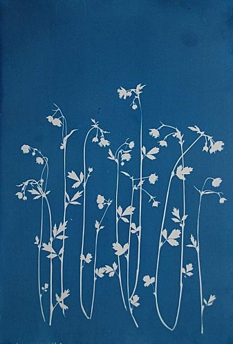 Cyanotype / blue print by Anna Maria Huber