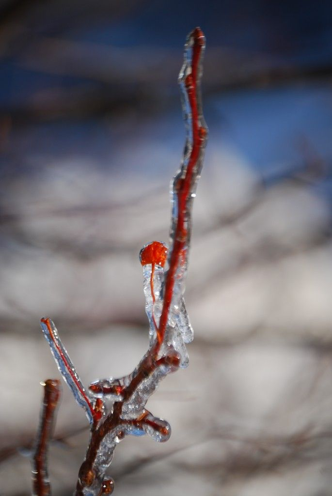 Winter Nature Photography in Lake County, Illinois
