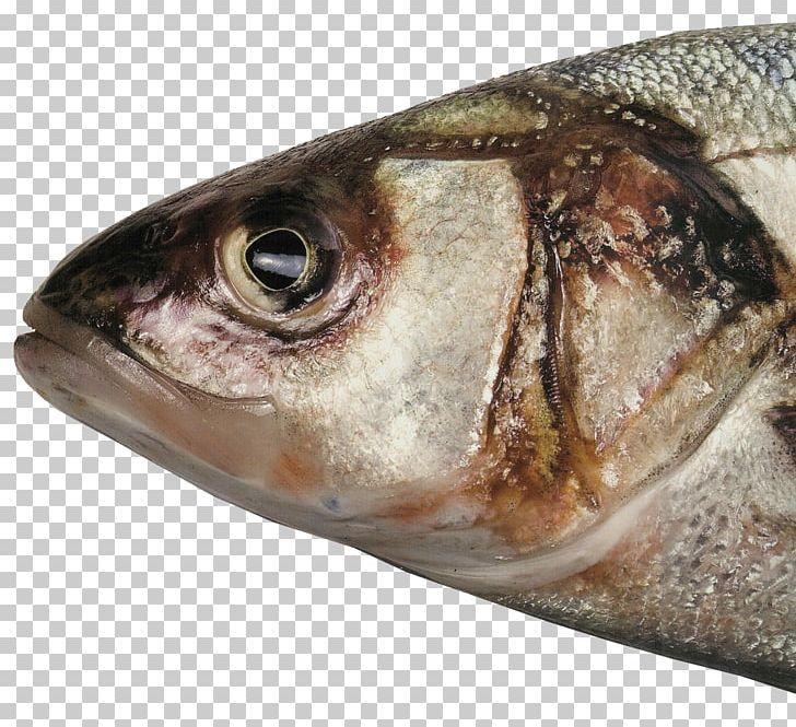 Fish Head Fish Soup Food Barreleye Png Animals Animal Source Foods Barreleye Cooking Desktop Wallpaper Fish Fish Soup Fish Illustration