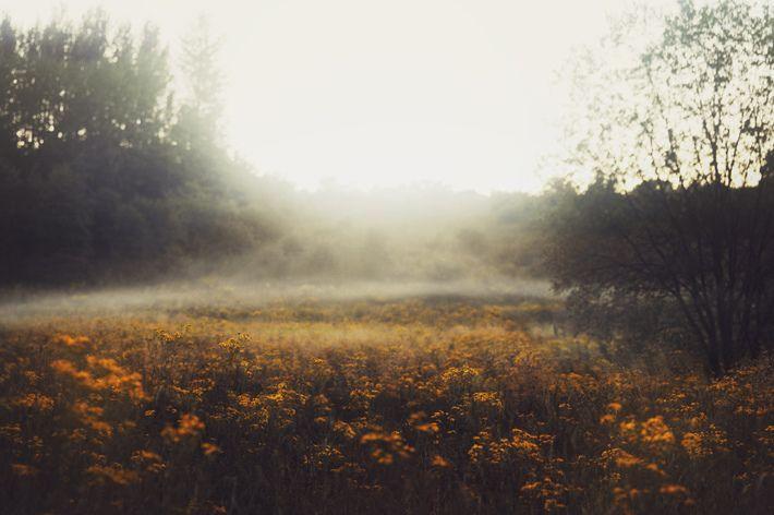 hellanne: by Ella Ruth – Nature