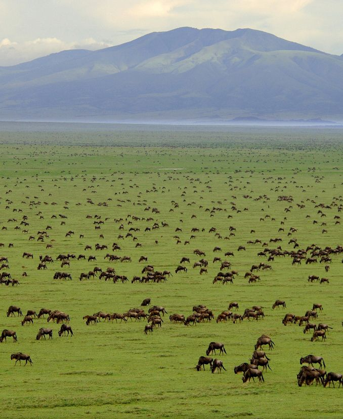 Serengeti National Park, Tanzania:Nearly one million wildebeest and 200,000 zebras move from the northern hills to the south every October and November during the short rains.