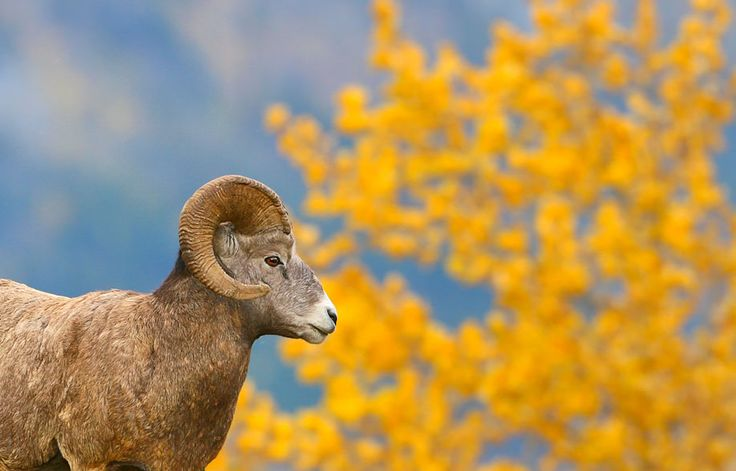 How to photograph (nearly) wild animals