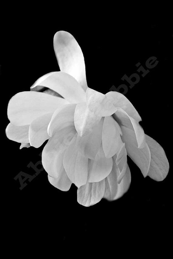 Photograph Art Black and White Photography by AbbieandPabbie, $25.00