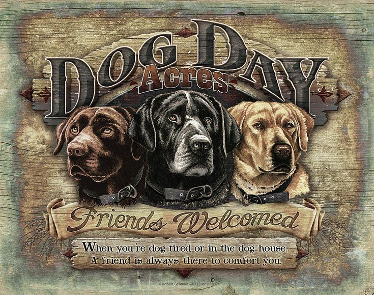 Dog Day Acres Sign Painting