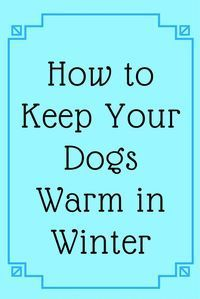 How to Keep your Dogs Warm in Winter  dog coats/ jumper/ sweater / outfit / clothes / raincoat /Thundershirt #lovedogs
