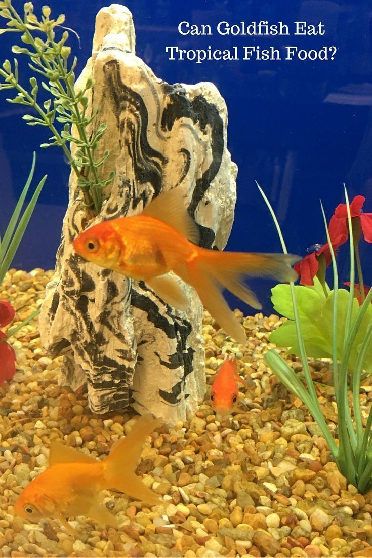 Bluehost Com Tropical Fish Fish Fish Recipes