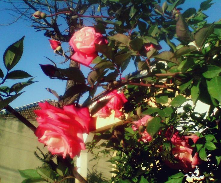 No hay nada mejor que oler unas flores