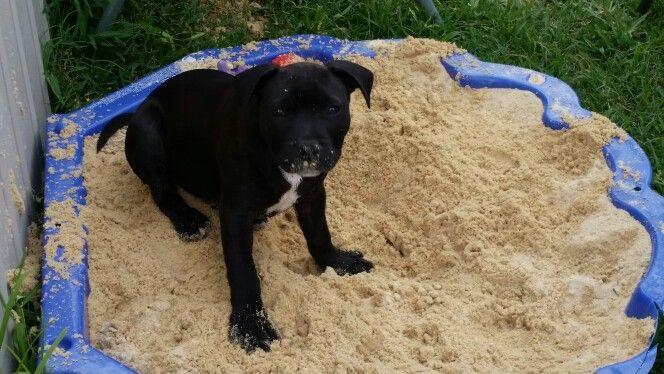 Spud in his sandpit