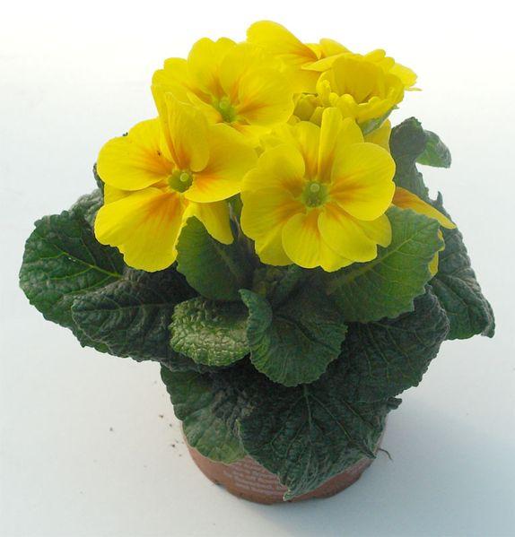 M s de 1000 ideas sobre comprar plantas online en pinterest for Viveros de plantas en vigo
