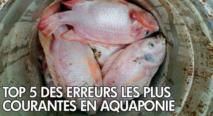 Tout le monde fait des erreurs surtoutsi vous êtes un débutant en aquaponie, vous avez de fortes chances de faire l'une des erreurs que nous allons vous citer ci-dessous. Faire une erreur dans votre système aquaponique peut signifier la perte de plantes et des poissons que vous aurez nourris et chouchoutés pendant des semaines. Vous …